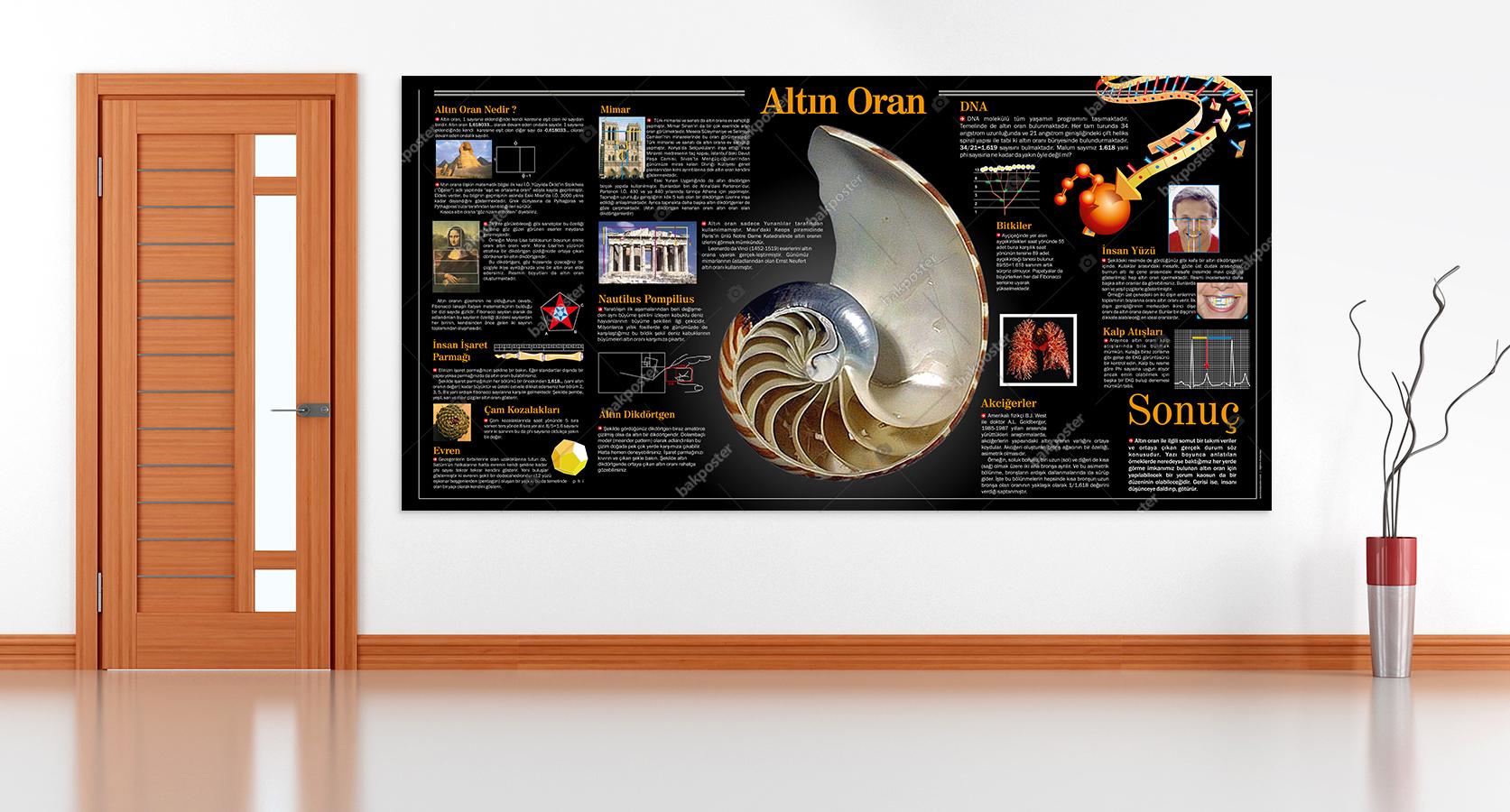 Altın Oran Görsel Pano Okul Posteri