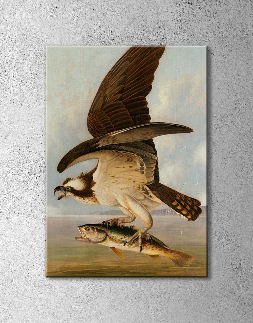 Kartal Avcı Kuş Balık Poster